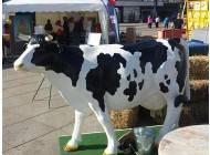 Kuh Wettmelken