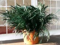 Palmtree decoration in a cup