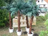 Palmtree decoration